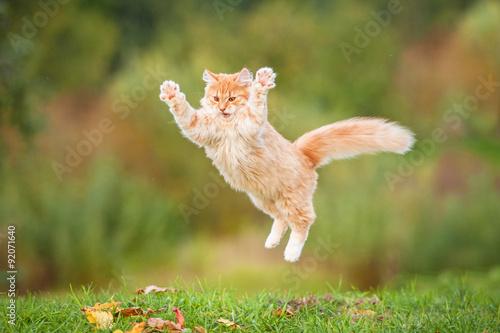 Śmieszny czerwony kota latanie w powietrzu w jesieni