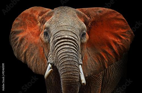 Elephants of Tsavo