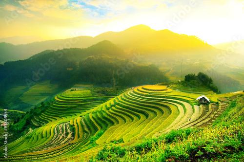 Pola ryżowe na tarasowych Mu Cang Chai, YenBai, Wietnam. Pola ryżowe przygotowują żniwa w północno-zachodnim Wietnamie. Wietnamskie krajobrazy.