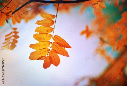 jesień w polsce