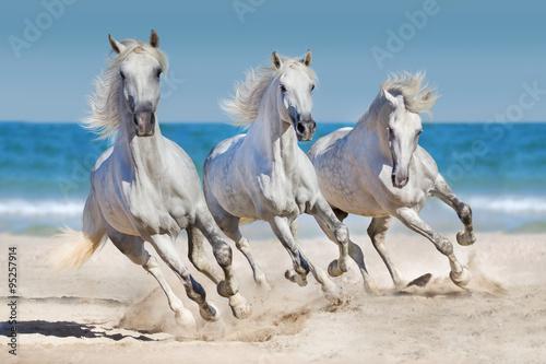 Horses run along the coast