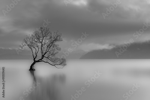 Samotne drzewo, jezioro Wanaka, Nowa Zelandia (czarno-białe)