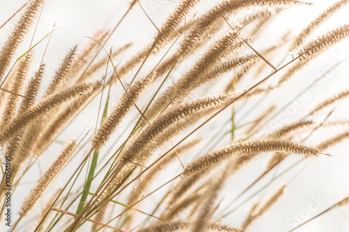 Łąka wiatru