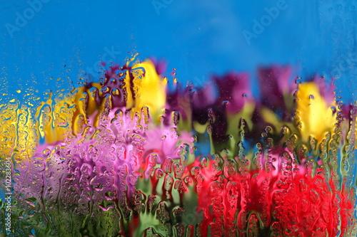 Krople wody i Tulipany