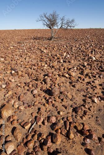 Sturt Stony desert in the Innamincka regional reserve South Australia.