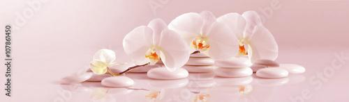 Biała orchidea z białymi kamykami na jasnoróżowym tle. Obraz panoramiczny