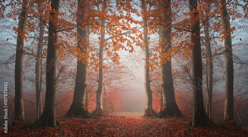 Bajkowa symetria lasu we mgle