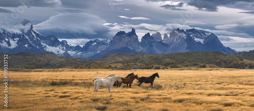 Park Narodowy Torres del Paine, Patagonia, Chile