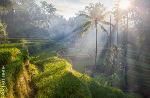 tarasowe pola ryżowe, Bali, Indonezja