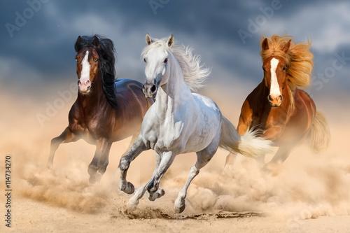 Trzy konie z długą grzywą biegają galopem na pustyni