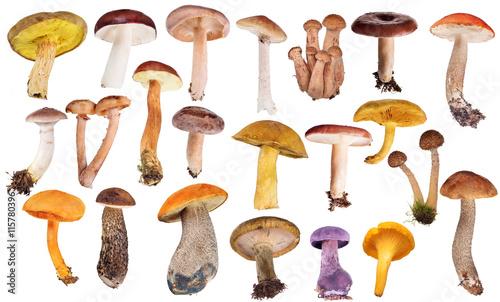 set of twenty two edible mushrooms isolated on white