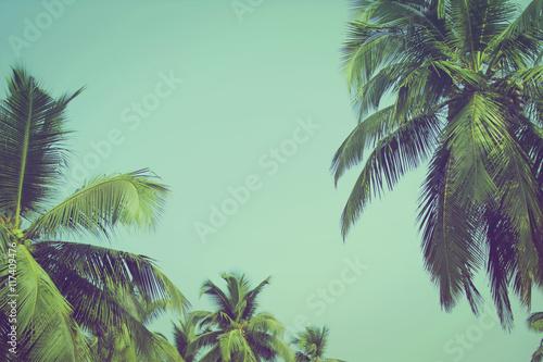 Kokosowi drzewka palmowe przy tropikalnym plażowym rocznika filtrem