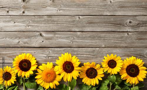 słoneczniki na desce
