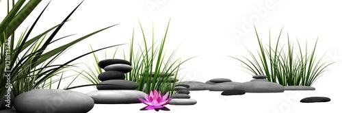 Trawa i kamienie z różową lilią wodną