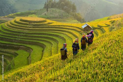 Pola ryżowe na tarasowych Mu Cang Chai, YenBai, Wietnam