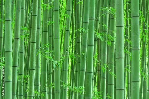 Cichy bambusowy las