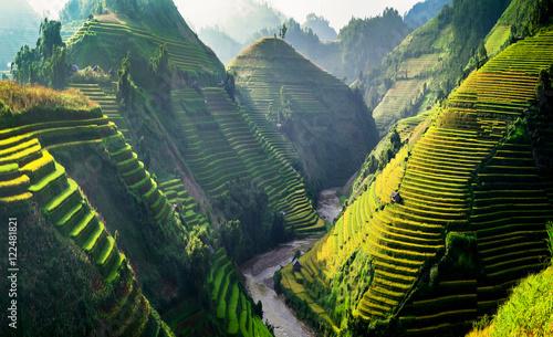 Pola ryżowe na tarasowych w północno-zachodniej części Wietnamu.