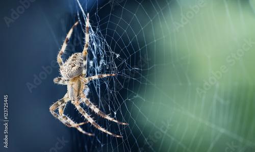 Zamyka up pająk w sieci
