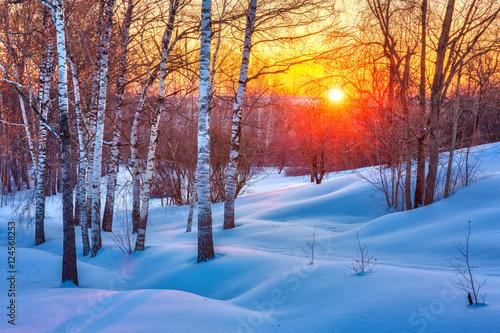 Kolorowy zmierzch w zima lesie