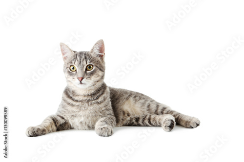 Beautiful grey cat isolated on a white