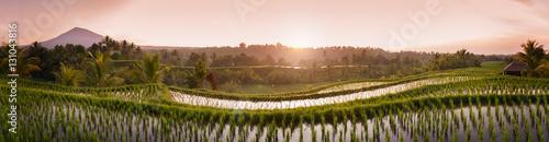Bali Rice Fields. Wioska Belimbing na Bali oferuje jedne z najpiękniejszych i najbardziej spektakularnych tarasów ryżowych w całej Indonezji. Poranne światło to wspaniały czas na fotografowanie krajobrazu.