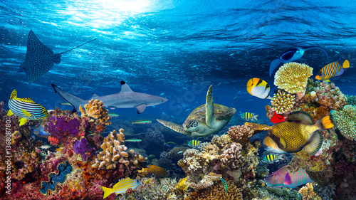 colorful 16to9 underwater coral reef panorama with many fishes turtle shark and marine life