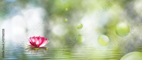 obraz kwiatu lotosu na wodzie