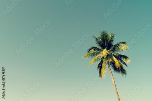Palmy kokosowe i świecące słońce z efektem vintage.
