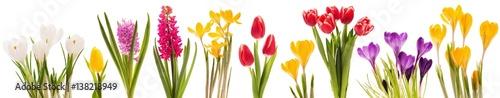 Kolekcja wiosennych kwiatów