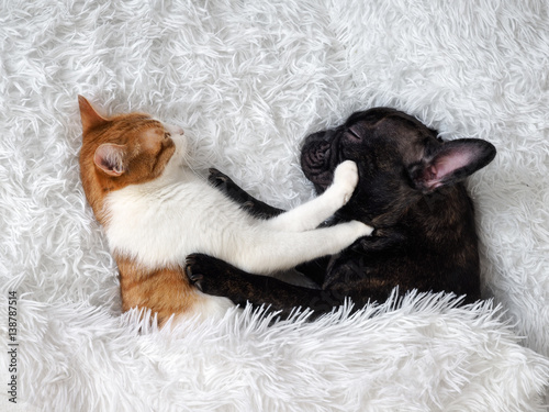 cat and dog. Cute animals are on the bed. Warm white fluffy blanket