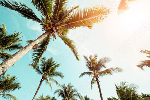 Kokosowy drzewko palmowe na plaży z światłem słonecznym w lecie - rocznika koloru brzmienie.