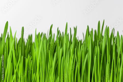 Zielona trawa na białym tle.