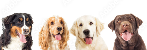 psy portretowe