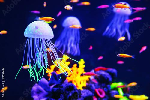 Piękne kolorowe meduzy w akwarium