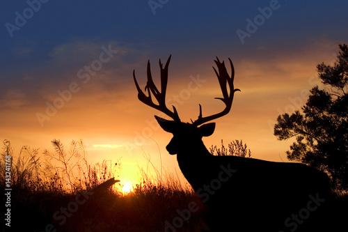 Sunset Mule Deer