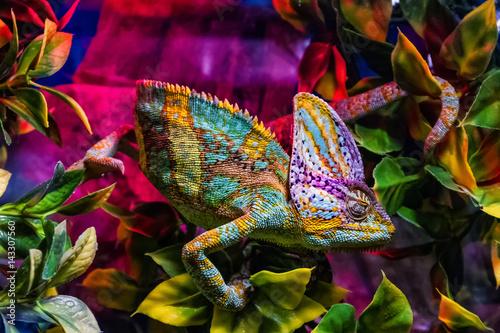 Wystawa zwierząt terrariowych w Użhorodzie
