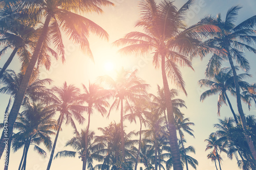 Tropical beach with palm trees and sunny sky, hot summer day