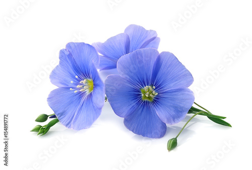Kwiaty lnu niebieskie.