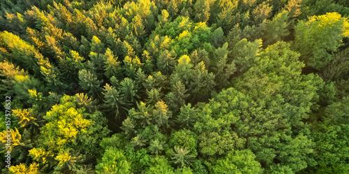 Widok z lasu świerkowego