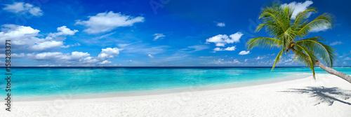 coco palm panorama super szeroki format na wymarzonej tropikalnej plaży