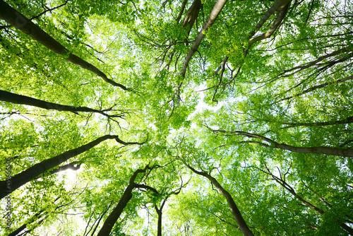 Daszki drzew