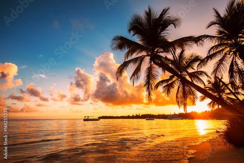 Palm Tree sylwetki na tropikalnej plaży, Punta Cana, Dominikana