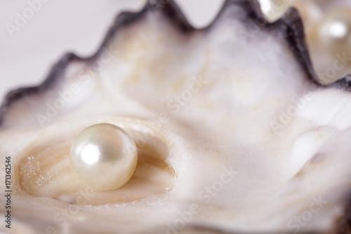 Pojedyncza perła w ostrygowej muszli