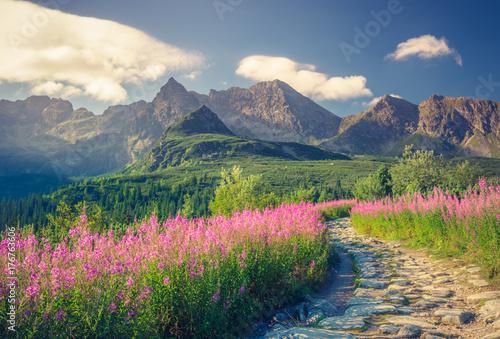 Tatry, krajobraz Polski, kolorowe kwiaty w dolinie Gąsienicowej (Hala Gasienicowa), letni szlak turystyczny
