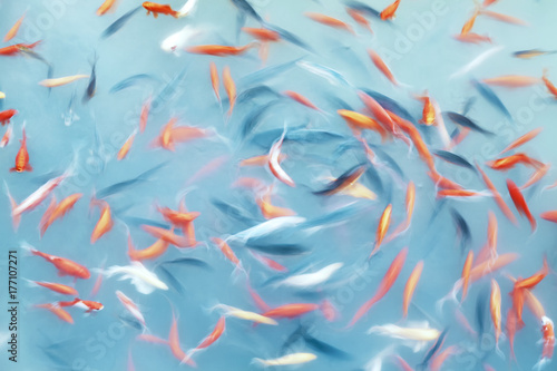 Abstrakcjonistyczny artystyczny tło robić ruch plamy ryba dopłynięcie w stawie, koloru tonowanie stosować.