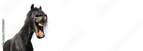 zabawny portret czarnego konia na białym tle w panoramicznym rozmiarze
