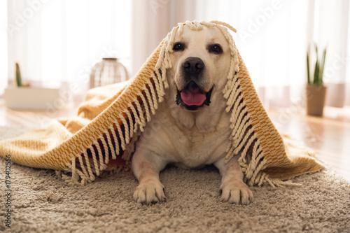Uroczy pies w domu