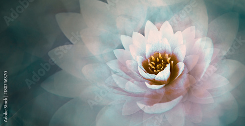 pink lotus flower with a dreamy blue background
