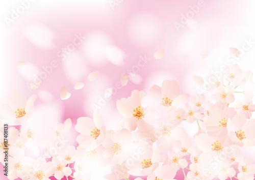 Kwiat wiśni puszysty dwa różowe
