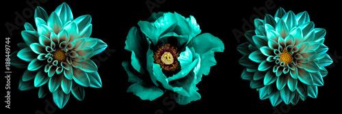 3 surrealistycznych egzotycznych wysokiej jakości turkusowych kwiatów makro odizolowywających na czerni. Przedmioty z życzeniami na rocznicę, ślub, dzień matki i kobiet
